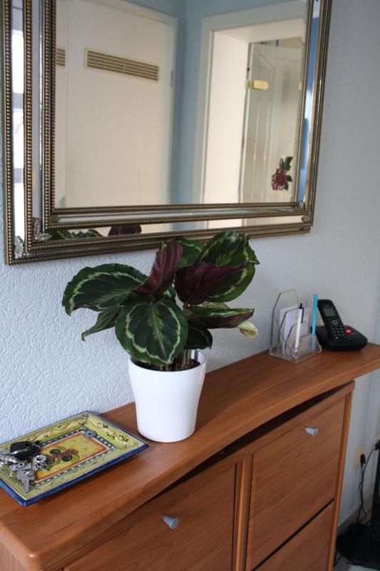 gartentipp licht f r zimmerpflanzen. Black Bedroom Furniture Sets. Home Design Ideas