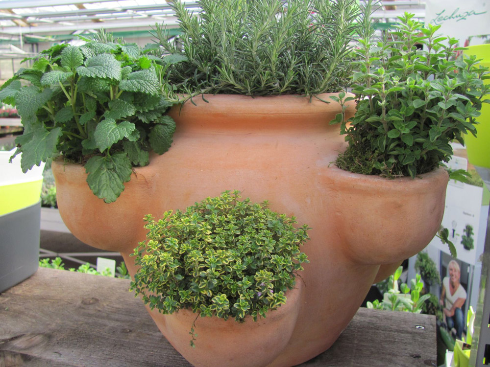 Gartentipp Gesunde Krauter Frisch Auf Den Tisch