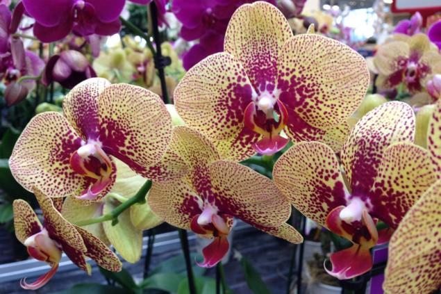 Gartentipp: Prachtvolle Orchideen