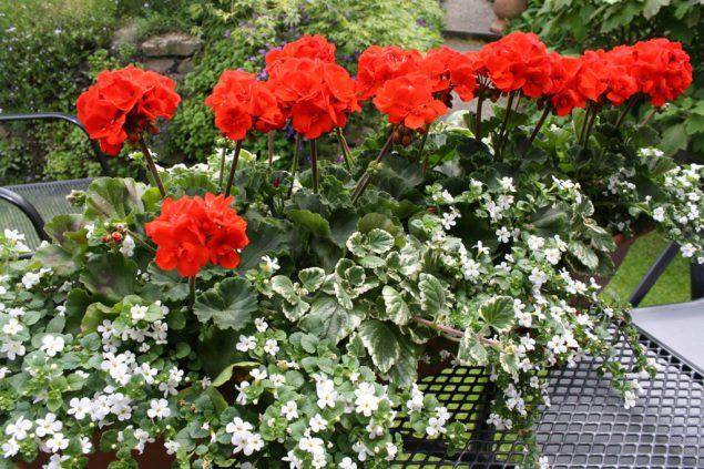 Gartentipp Pflege Von Balkonkasten Und Terrassenpflanzen