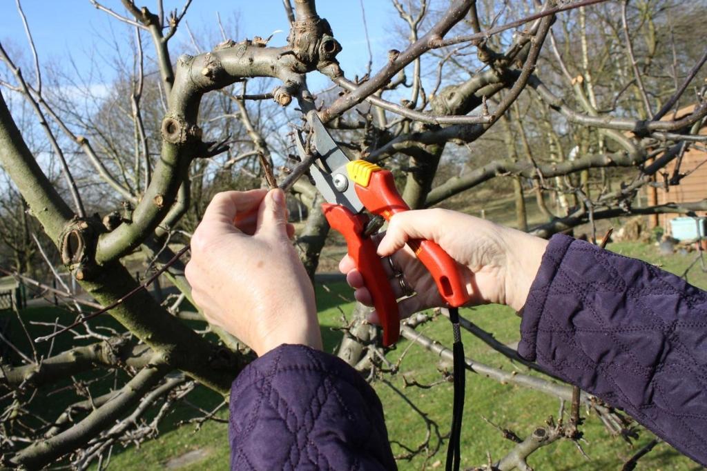 Gartentipp Obstbaume Richtig Schneiden