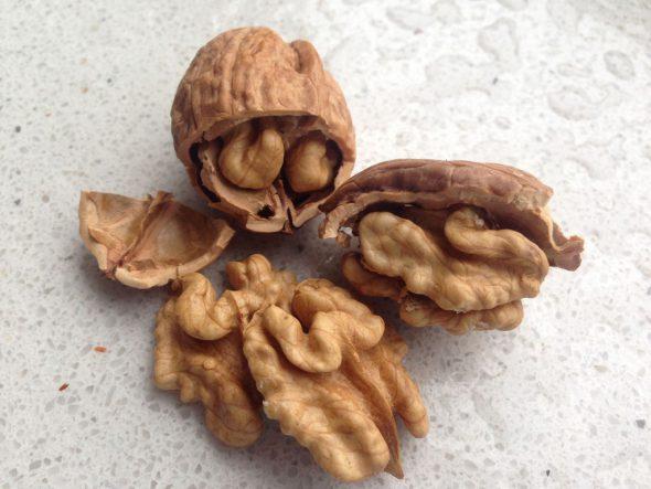 Die Walnuss - vergleichbar mit einem Gehirn