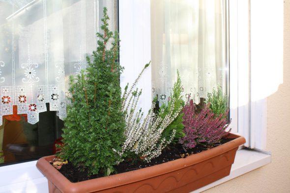 Winterliche Bepflanzung eines Balkonkastens